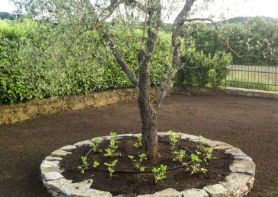 Realizzazione e manutenzione giardini (6)