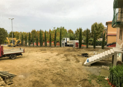 Trapianto piante, alberi ad alto fusto, ulivi (4)