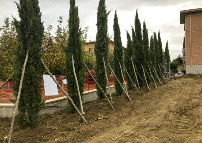 Trapianto piante, alberi ad alto fusto, ulivi (5)