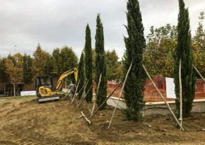 Trapianto piante, alberi ad alto fusto, ulivi (6)
